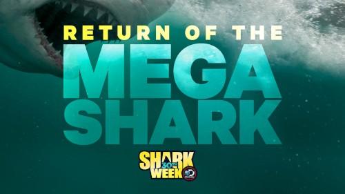 Mega Shark 2018