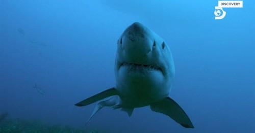 Shark Week 2019 Isle of Jaws-Blood Brothers 1080p WEB x264